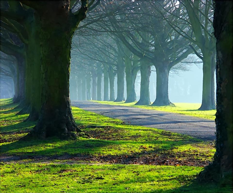 bosque-