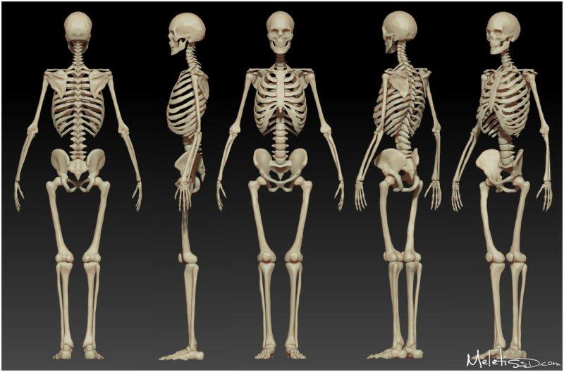 respiración huesos