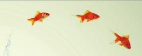 peces-