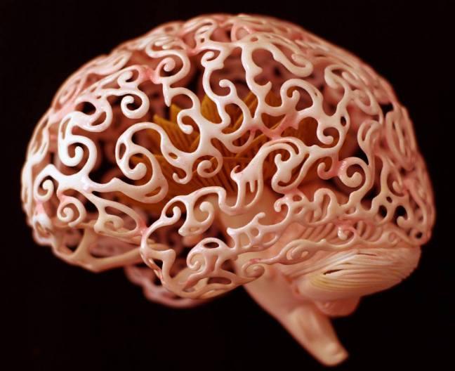 cerebro.,