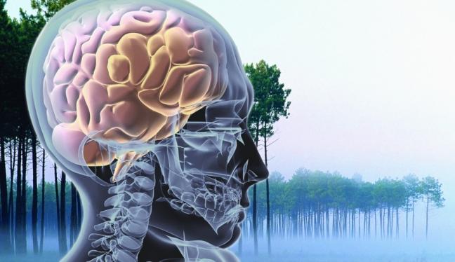 La realidad con la que convivimos es una simulación de nuestro cerebro